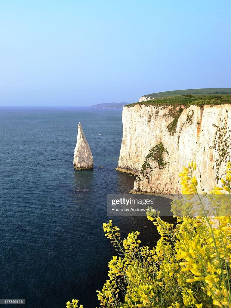 Wild flowers at old harry rocks
