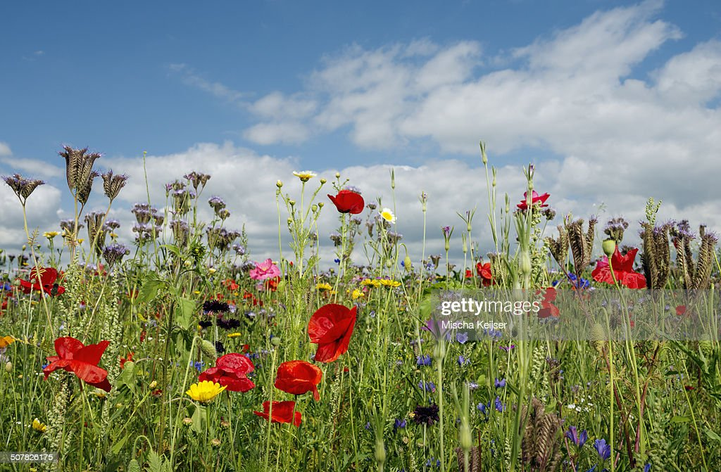 Wild flowers blossoming in summer
