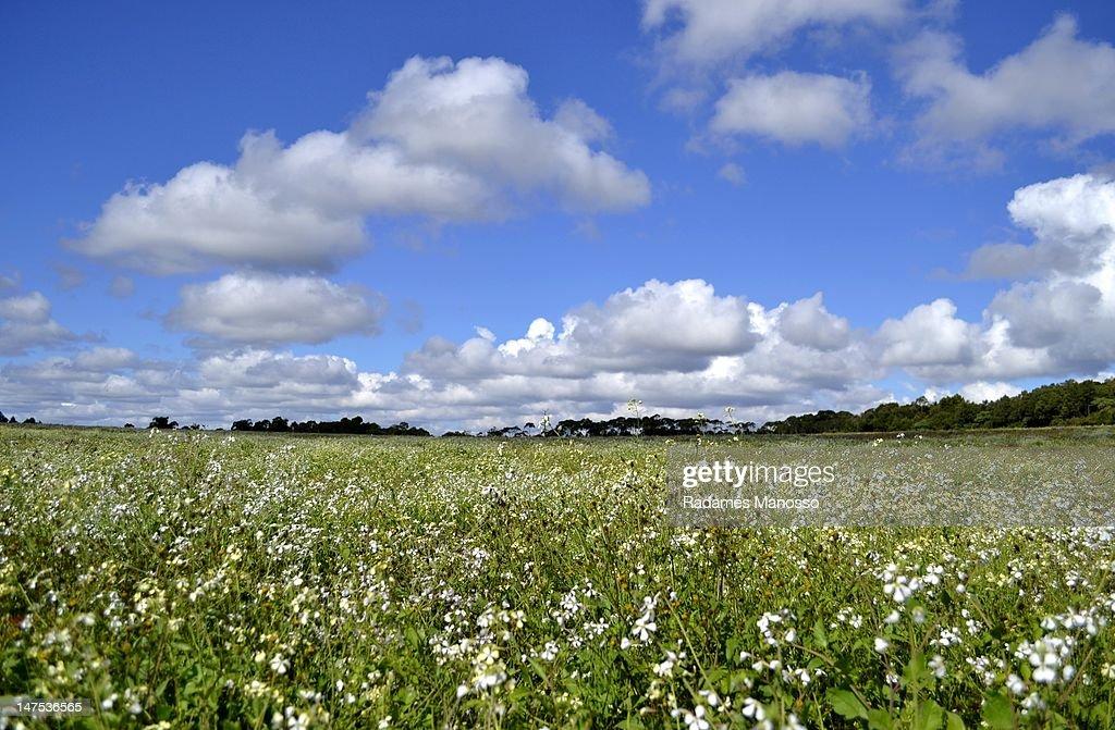Wild flowers field : Foto de stock