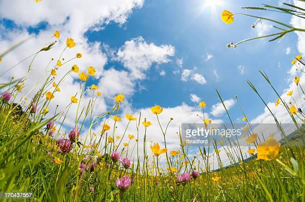 野生の花の牧草地