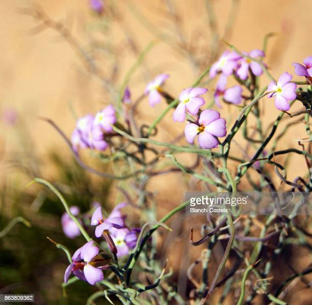 Wild flowers in the sand