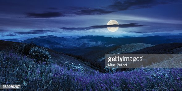 wild flowers on the mountain top at night : Stock Photo