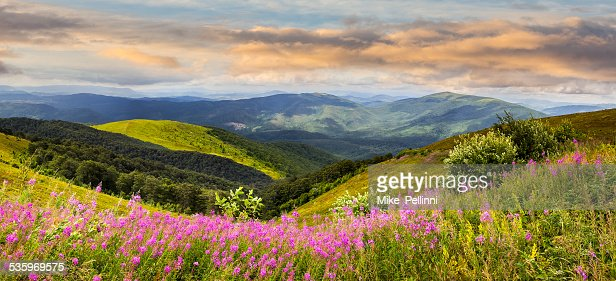 wild flowers on the mountain top at sunrise : Stock Photo
