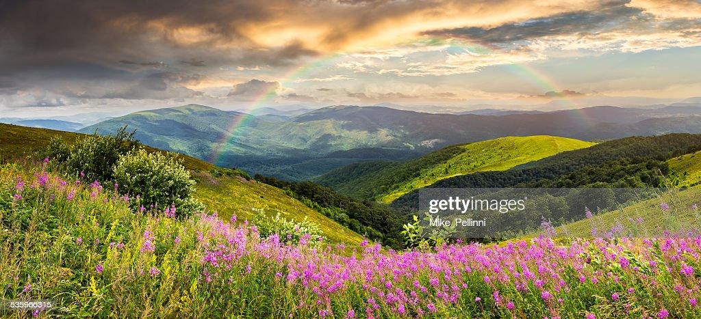 wild flowers on the mountain top : Stock Photo