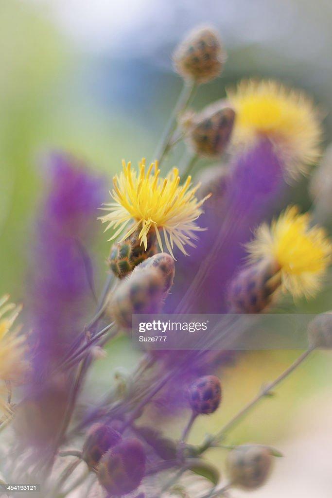 Wild flowers : Stock Photo