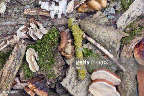Fundo de floresta selvagem Chão : Foto de stock
