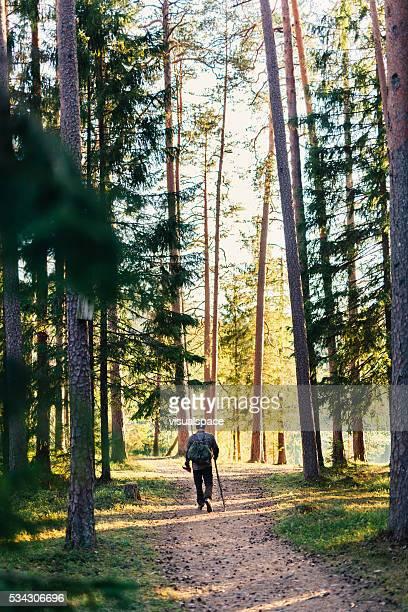 野生の森林のハイキング、サンセット