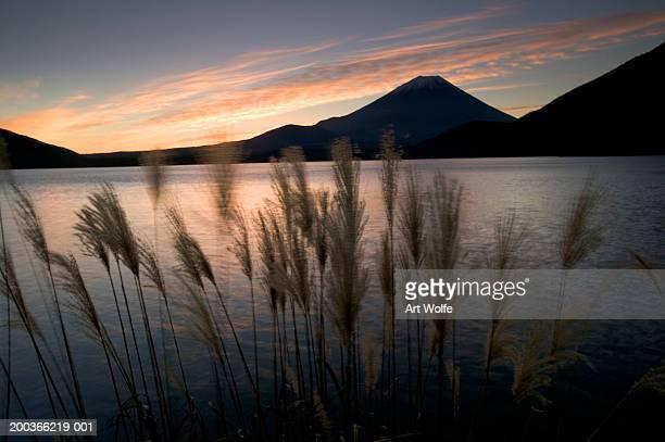 Wild grasses and Mount Fuji, Fuji-Hakone-Izu National Park, Honshu, Japan