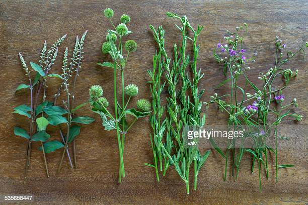 Wild herbs in a row on a wooden table