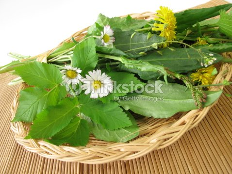 Wild herbs in basket : Stock Photo