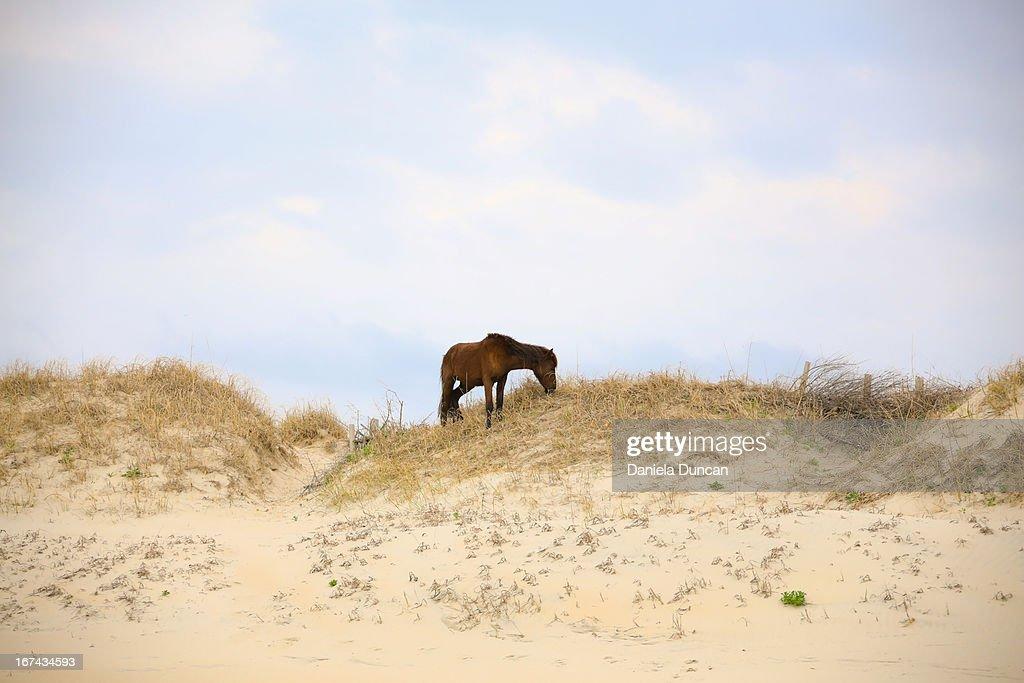 Wild horse : Foto de stock