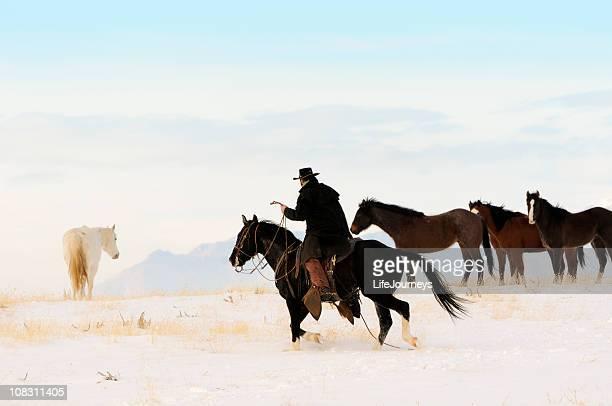 Wild Horse Roundup On Snowy Winter Range