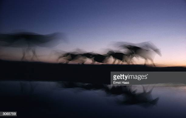 Wild horses are reflected in water as they gallop across a darkening Nevada landscape Creation book and Colour Photography book