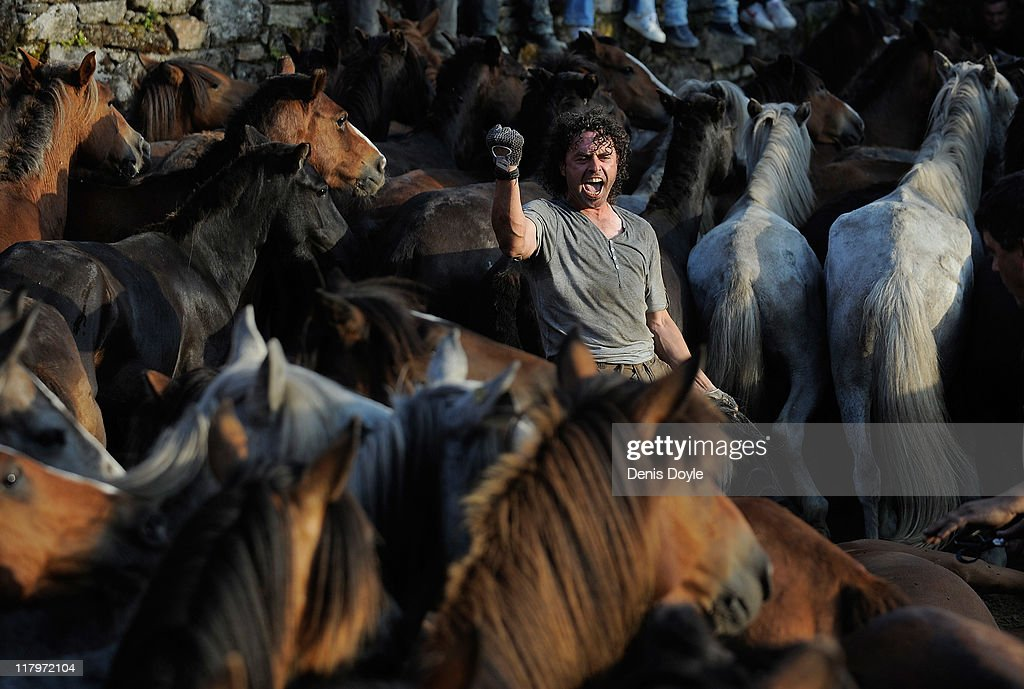 Wild horses are tamed during the Rapa das Bestas (shearing of the beasts) festival on July 2, 2011 in Sabucedo, Spain. Hundreds of wild horses are rounded up from the mountains and trimmed and marked in the village corral.