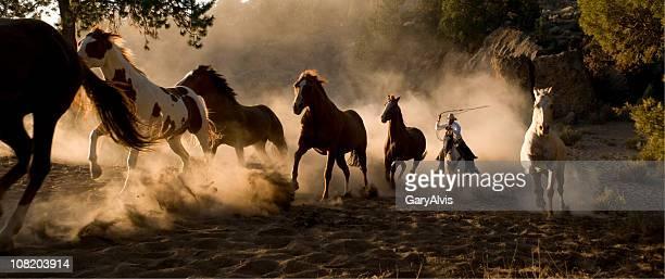 Caballos salvajes se Chases por Cowboy con lazo