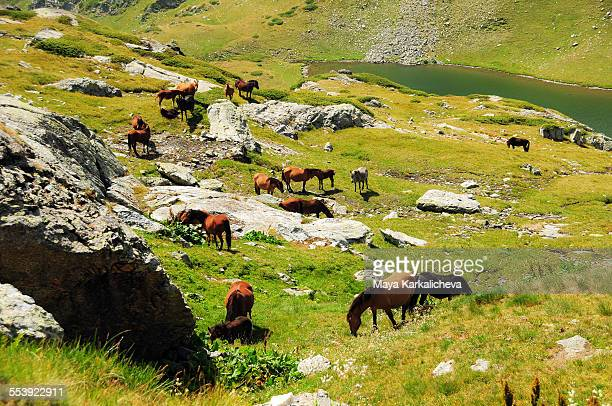 Wild horses grazing by a mountain lake