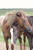 wild horses greeting