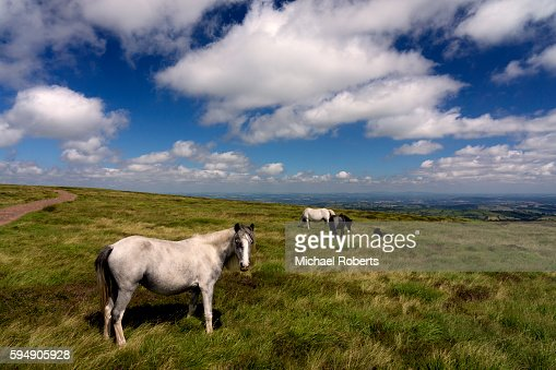 Wild horses in the Black Mountains, Wales