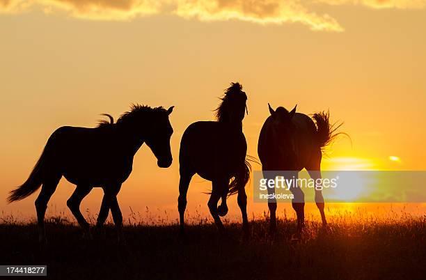 Cavalos selvagens