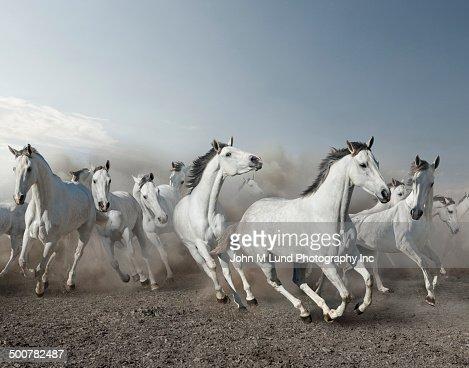Wild horses stampeding in desert