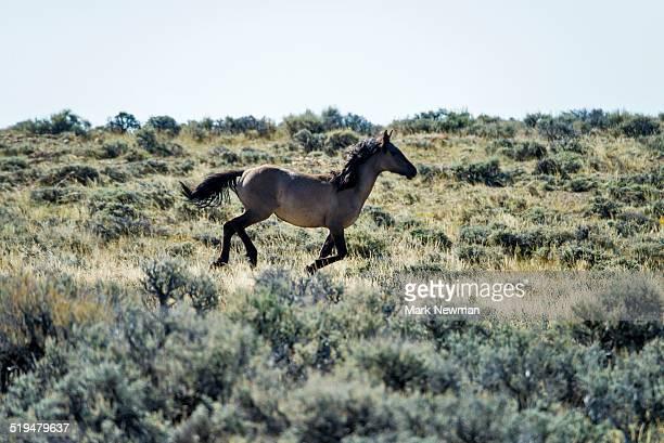 Wild horses,Wyoming