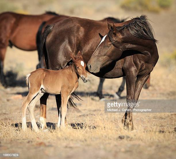 Wild Mare with Young Colt