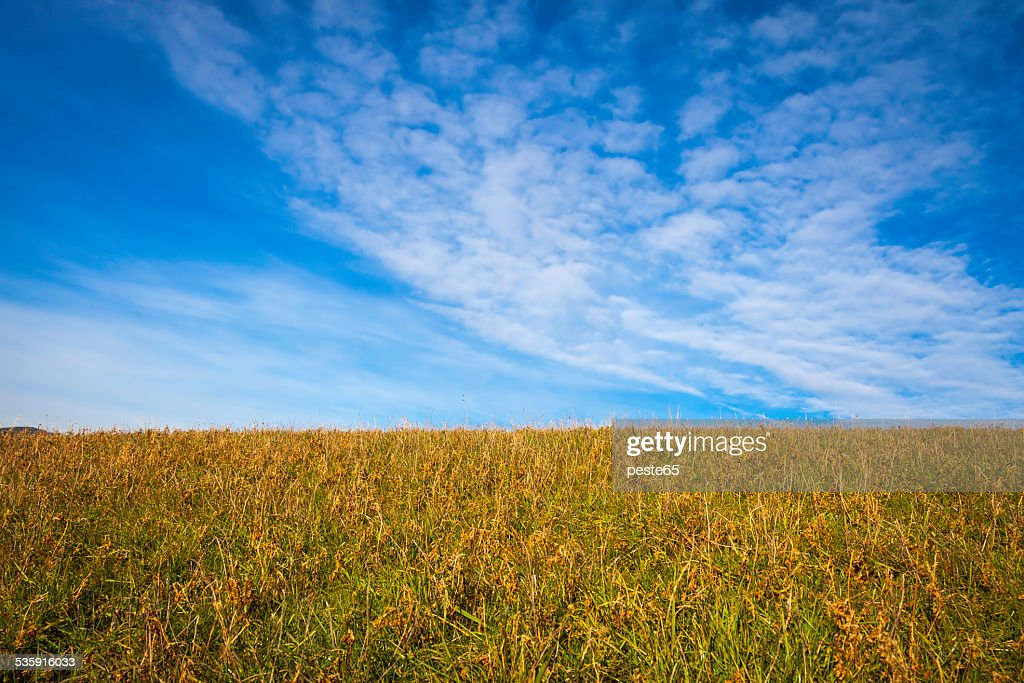Wild meadow and blue sky. Color image : Stock Photo