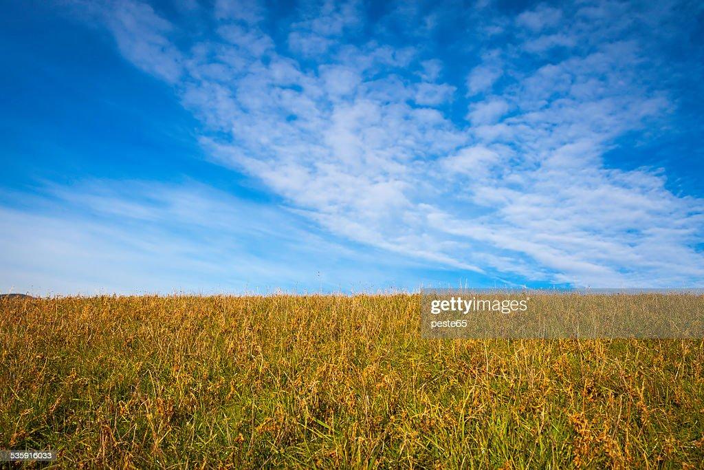 Wild Prado e céu azul. Imagem a cores : Foto de stock