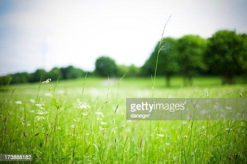 ワイルド草地