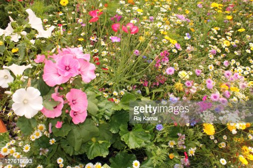 Wild mixed flower field : Stock Photo