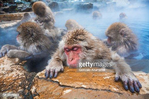 Wild monkeys bathing in Jigokudani Monkey Park