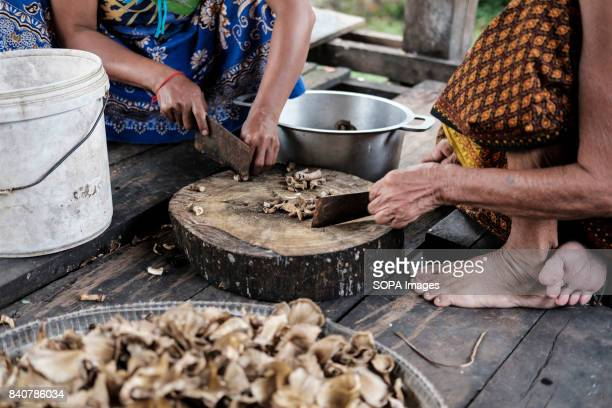 Wild mushroom collected from the forest are prepared for consumption Like all the villages along the Sesan and Sepok the villagers of Krabei Chrun...