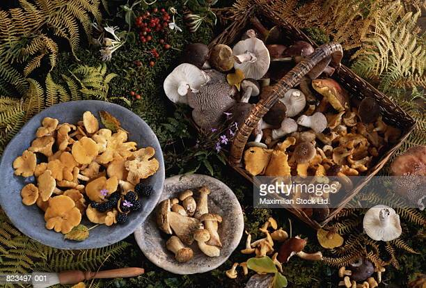 Wild mushrooms arranged in bowls and wicker basket, elevated view