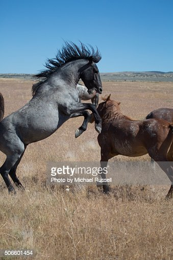 match & flirt with singles in wild horse We have now partnered with matchcom to bring you singles, singles, personals personals, animal lovers, pet lovers, dog, cat, horse, bird , fish.