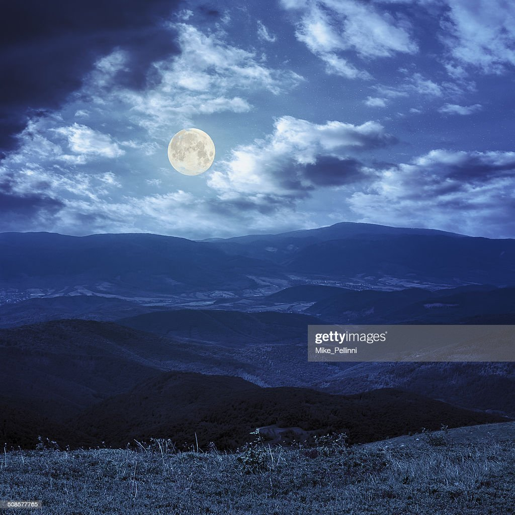 wild plants on the mountain top at night : Stock Photo