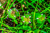 top view of wild flowering plants that grows in the uncultivated spring fields of the Italian region of Lazio