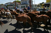 Wild ponies are herded down main street to the fair grounds after swimming the the Assateague Channel for their annual swim to Chincoteague Island on...