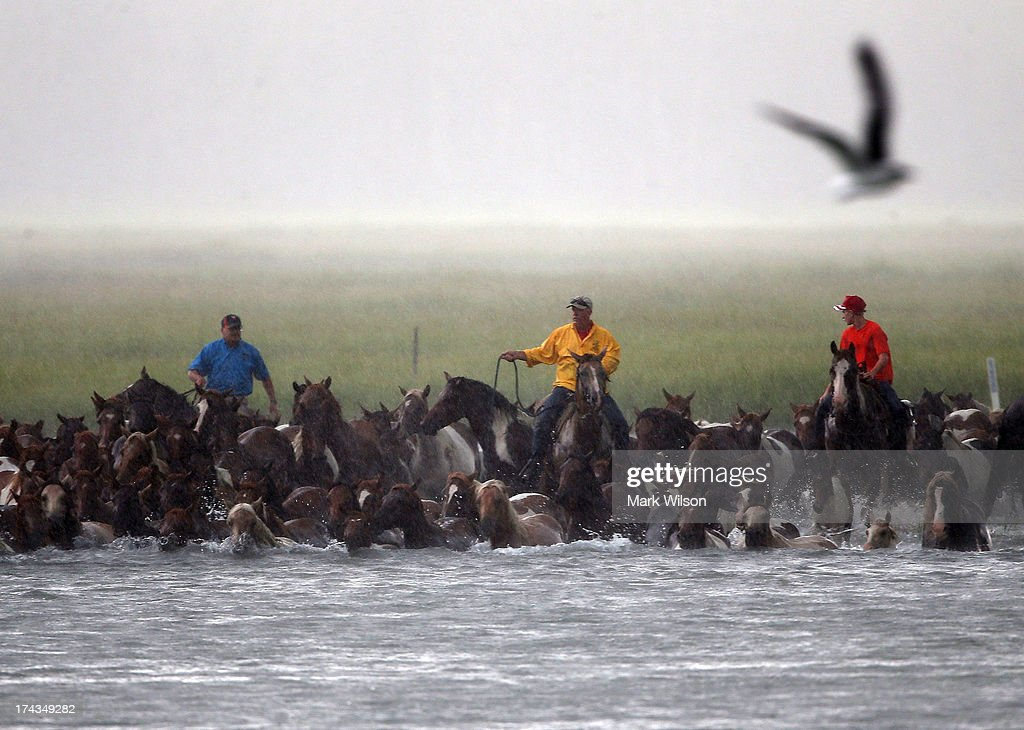 Wild ponies are herded into the Assateague Channel during a rain storm for their annual swim from Assateague Island to Chincoteague on July 24 2013...