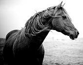 Wild Horse with Windblown Hair
