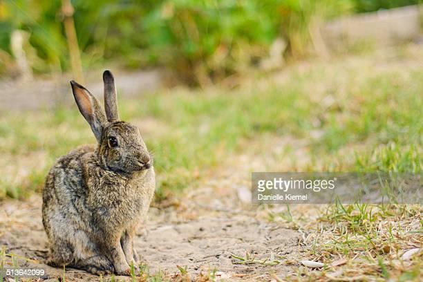 Wild rabbit sitting in home garden
