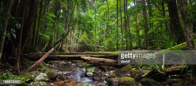 Wild Rainforest Panorama