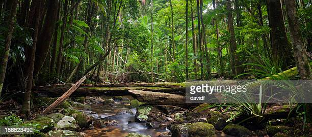 Wild Rainforest Panorama