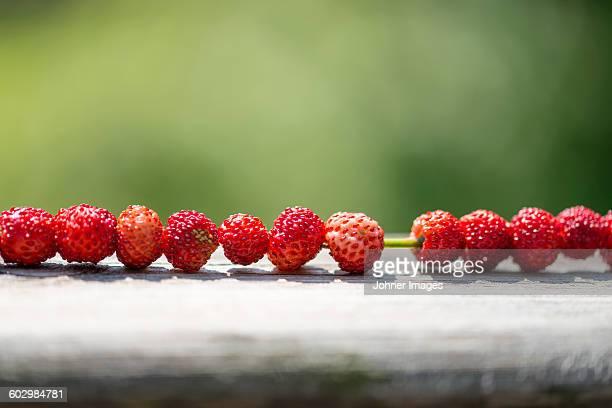 Wild raspberries on grass blade