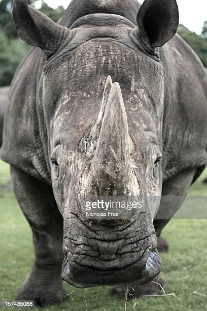 Wilden Rhino
