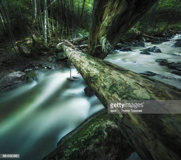 Wild river II
