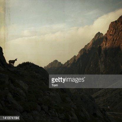 Wild silence : Stock Photo