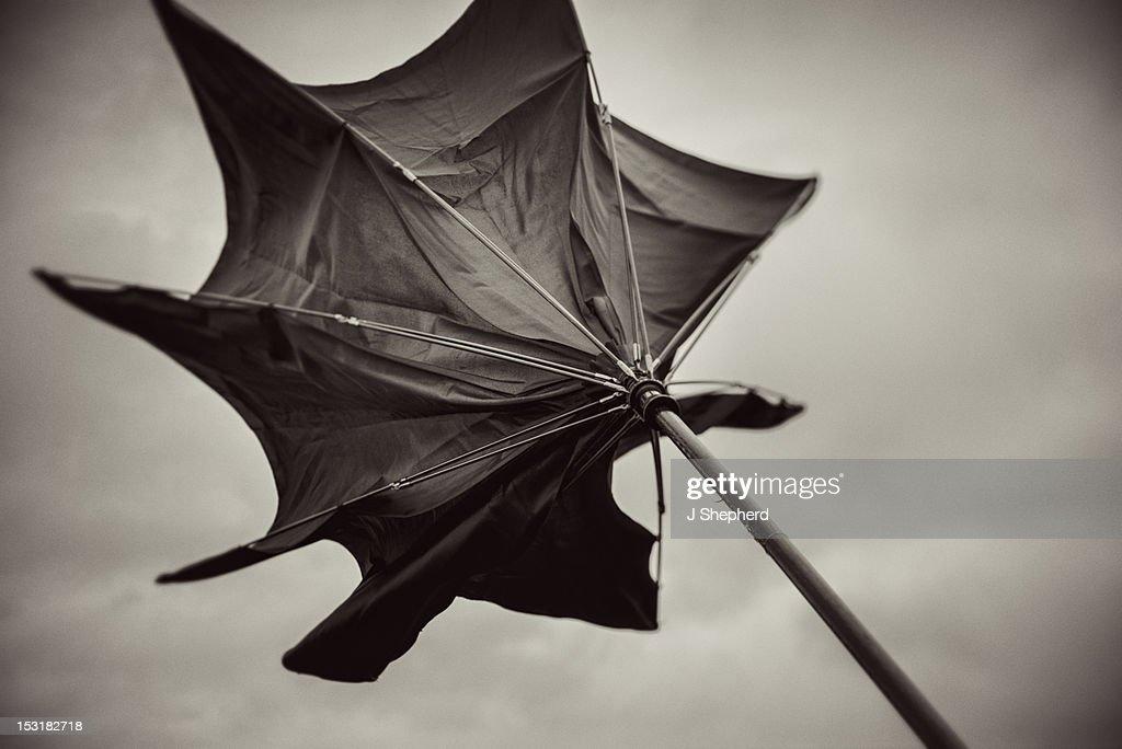 Wild umbrella : Stock Photo