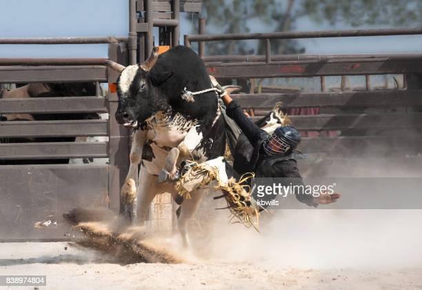 wild west rodeo cowboy riding a bucking black bull