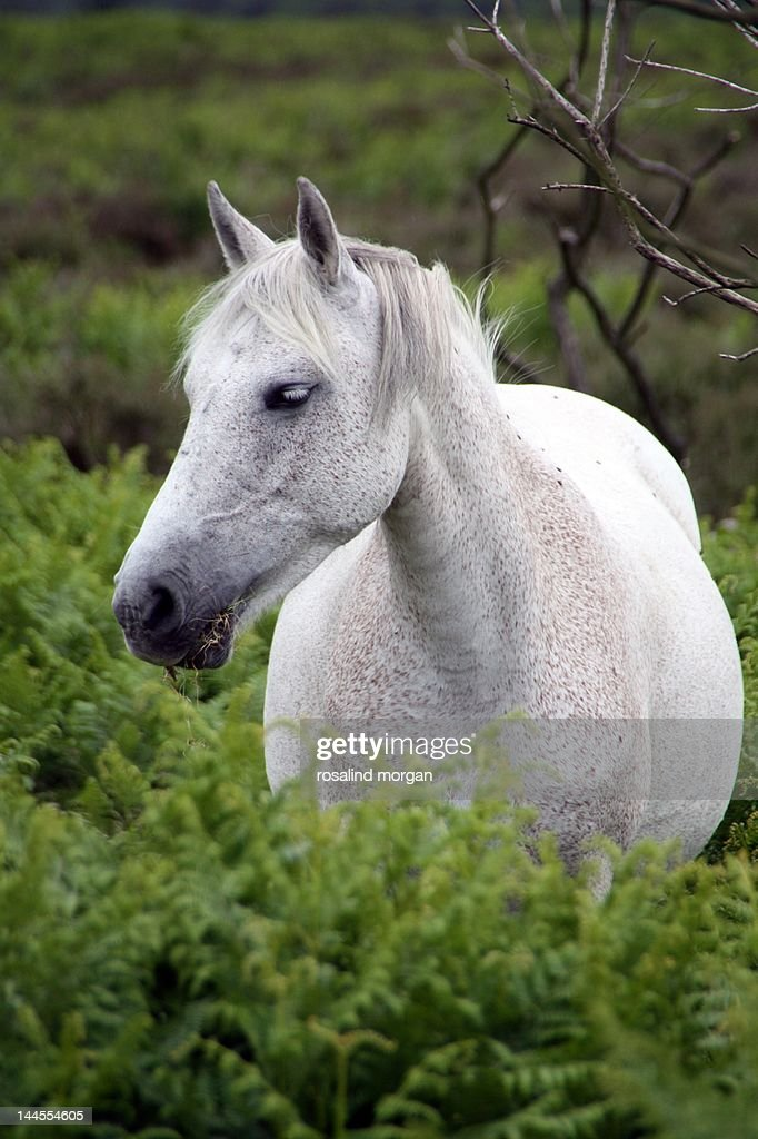 Wild White Horse Standing In Ferns Stock Photo | Getty Images