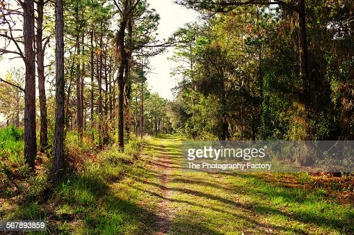 Wilderness trail along Manatee River